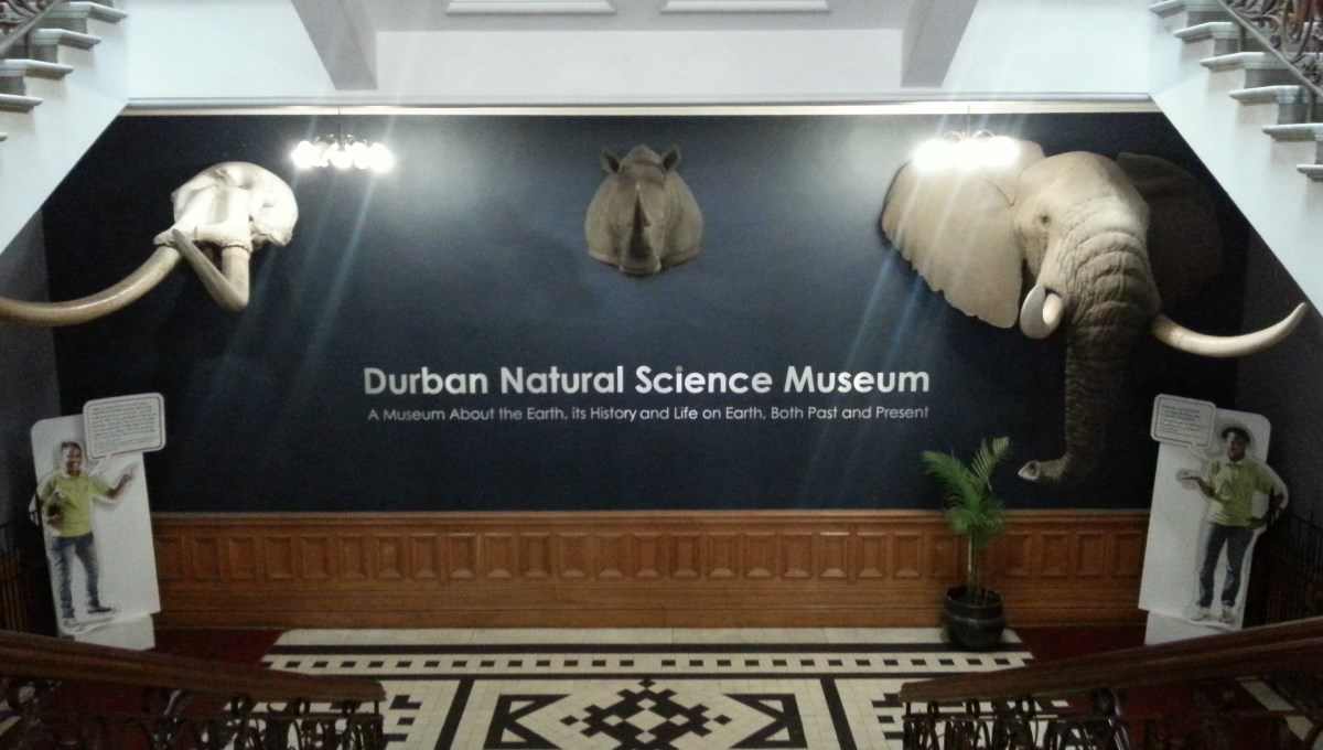 Durban's natural museum lobby